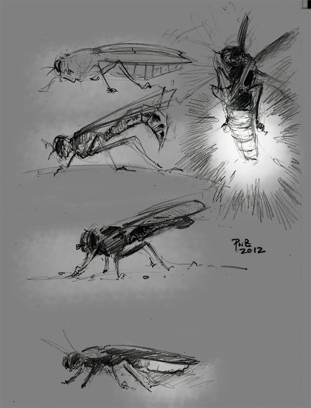 zdepski's pencil drawing of insects
