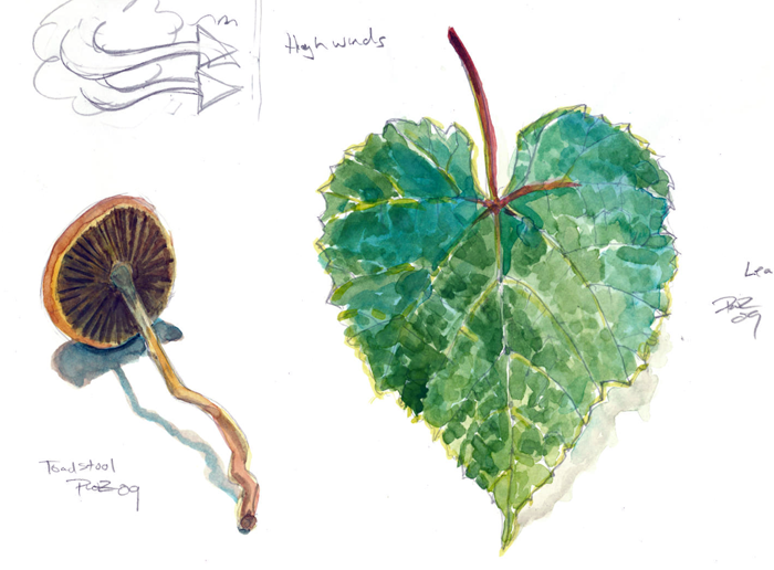 zdepski's lunchtime watercolor studies of nature objects