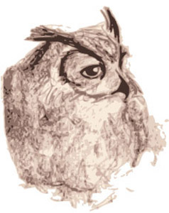 zdepski's owl sketch, turned digital via Adobe Illustrator