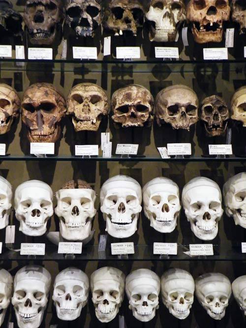 Zdepski's photo of skulls at Evolution